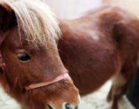 В детском зоопарке Берлина Герлитцер-парке сириец изнасиловал пони
