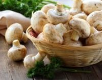 Украина увеличила экспорт грибов в 50 раз