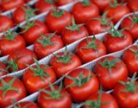 Украина вернула Турции партию томатов