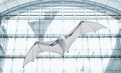 В Германии создали робота, который напоминает летучую лисицу