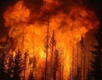 Синоптики предупредили о угрозе пожаров по Украине