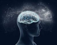 Исследование: Мозг производит нервные клетки даже в старости