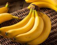 Эксперты: существует риск полного исчезновения бананов на планете