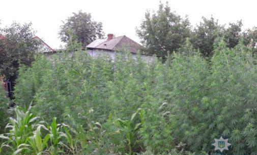 У жительницы Тульчина изъяли 10 кг наркотиков и более тысячи растений конопли