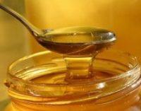 В прошлом году экспорт украинского меда вырос почти на 40%