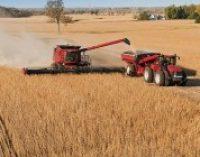 Максим Мартынюк: уборка началась, прогноз остается прежним – 60 млн. тонн зерновых