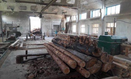 На Житомирщине пресекли легализацию и экспорт незаконных лесо — и пиломатериалов