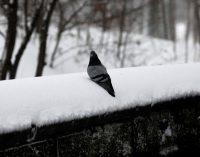Синоптики дали прогноз погоды на декабрь