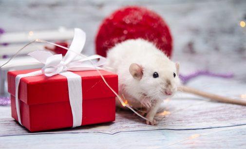 Как правильно встречать Год Белой металлической Крысы