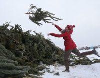 Киевляне в 2020 году сдали на утилизацию более 11 тыс. елок
